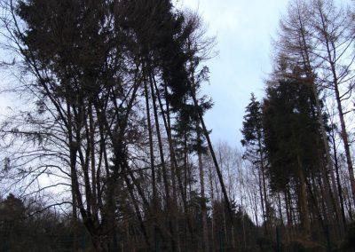 Hier stand vor Kyrill ein dichter Baumbestand