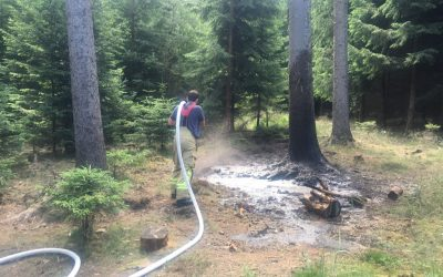 Flächenbrand verlief glimpflich
